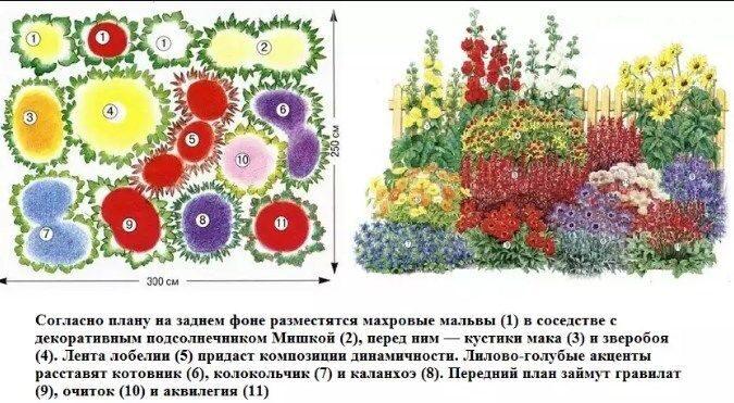 Схема посадки многолетних цветов для клумб